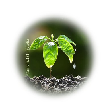 Bild für Kategorie EM in Garten + Pflanzenwelt
