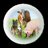 Bild für Kategorie EM in der Tierhaltung