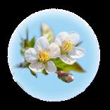Bild für Kategorie Pflanzenstärkung