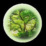 Bild für Kategorie Baum + Strauchbehandlung