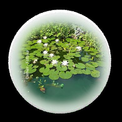 Bild für Kategorie Biotope + Folienteiche