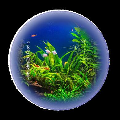 Bild für Kategorie Aquarien + Zimmerbrunnen