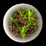 Bild für Kategorie Ackerbau