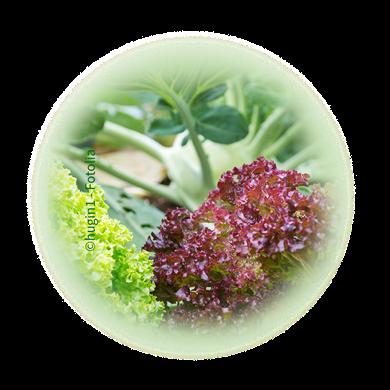 Bild für Kategorie Gemüsebau