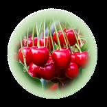 Bild für Kategorie Obstbau