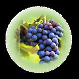 Bild für Kategorie Weinbau