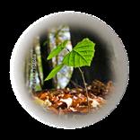Bild für Kategorie Forstwirtschaft