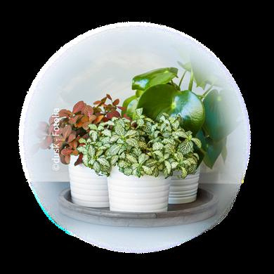 Bild für Kategorie Topf- + Zimmerpflanzen