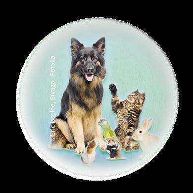 Bild für Kategorie Klein- + Haustiere
