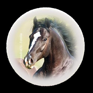 Bild für Kategorie Pferde