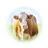 Bild für Kategorie Rinderhaltung