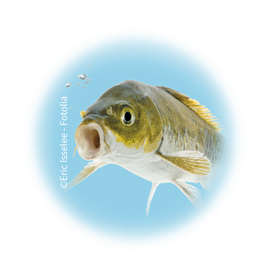 Bild für Kategorie Fischzucht