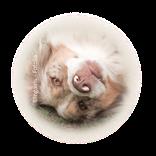 Bild für Kategorie Tierpflegeprodukte